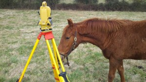 Horsing Around while Land Surveying